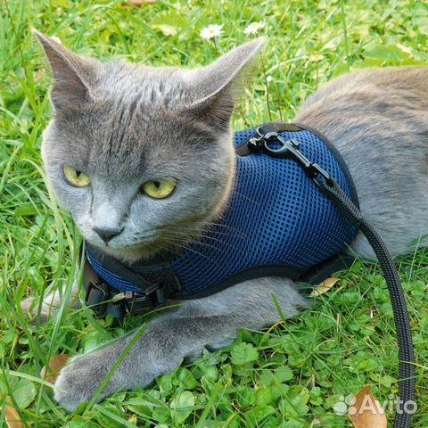 Шлейка для кошек фото