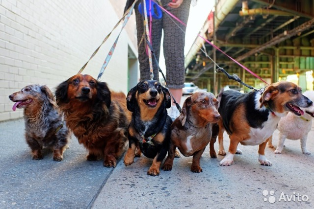 Услуги - Выгул собак в Санкт-Петербурге предложение и поиск услуг на Avito - Объявления на сайте Avito