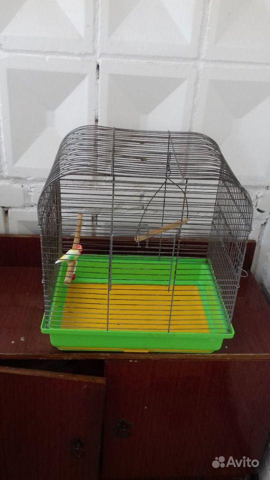 Продам клетку для волнистого попугая или канарейки в Томске - фотография № 1