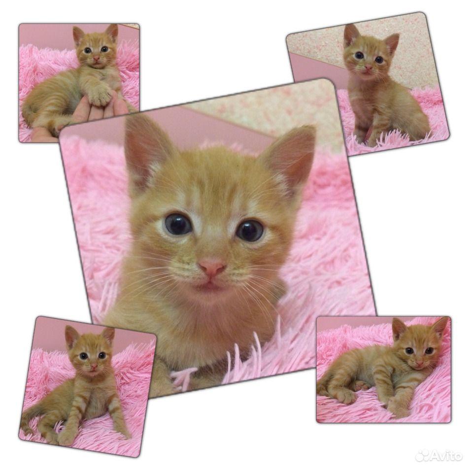 Котёнок в Навле - фотография № 1