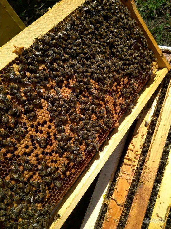 Рой пчёл в Ворошнево - фотография № 3