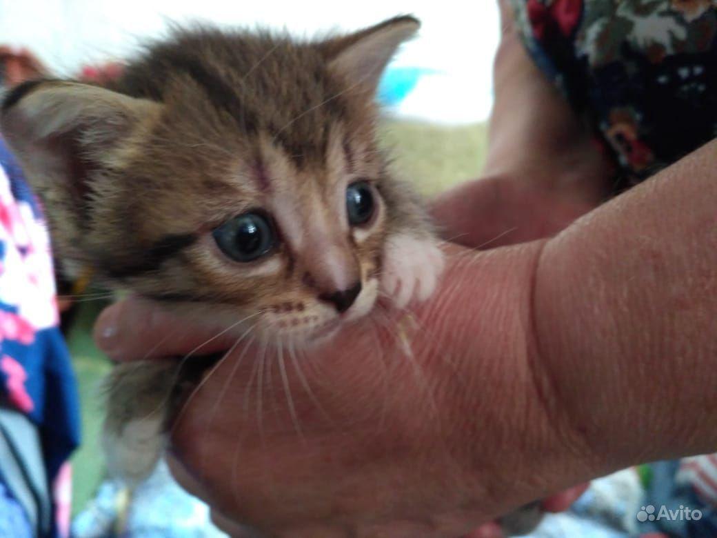 Котенок, девочка ищет заботливых мампап