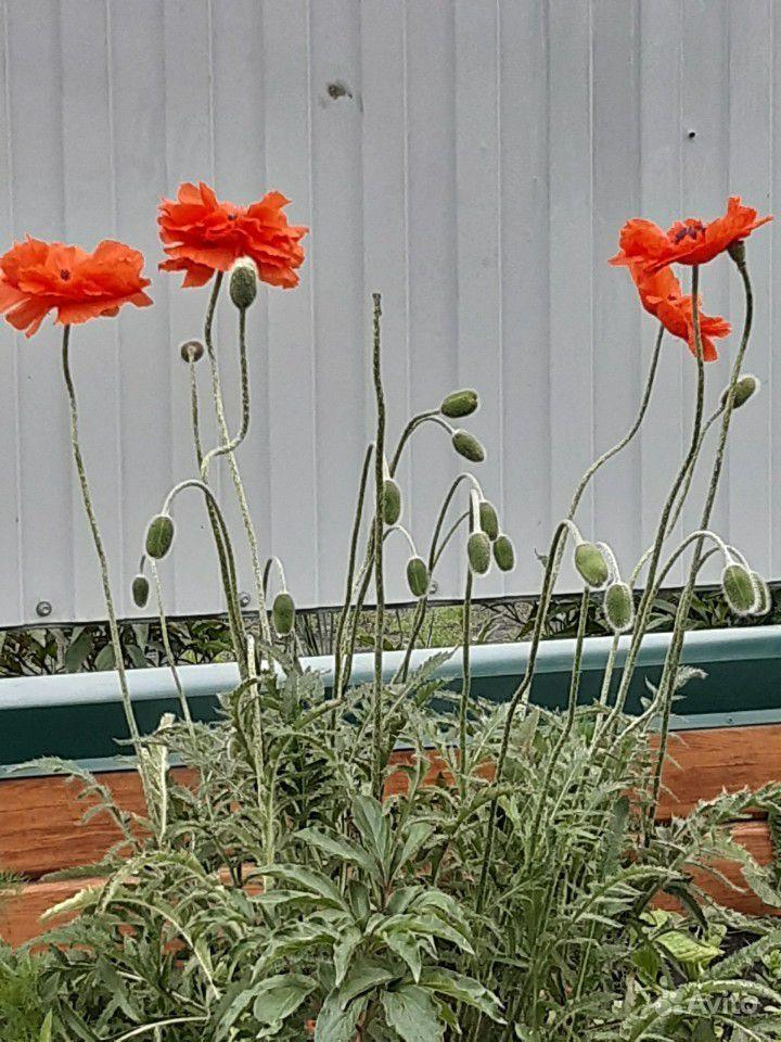 Цветы делюсь красотой или меняюсь купить на Зозу.ру - фотография № 1