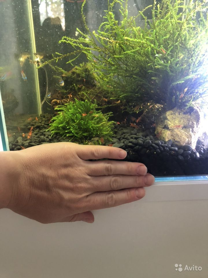 Мох для аквариума. Водоросли купить на Зозу.ру - фотография № 3