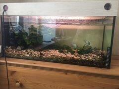 Аквариум с рыбками 120л