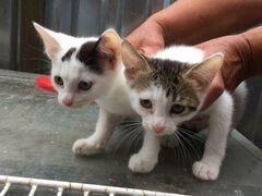 Два братика озорника хотят найти дом и заботливого