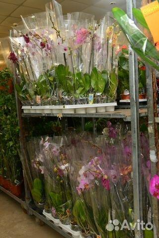 Цветы комнатные липецк