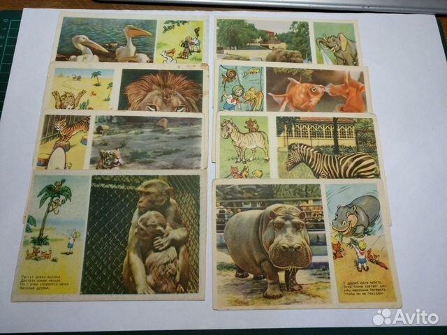Открытки зоопарка, открытка другу английском