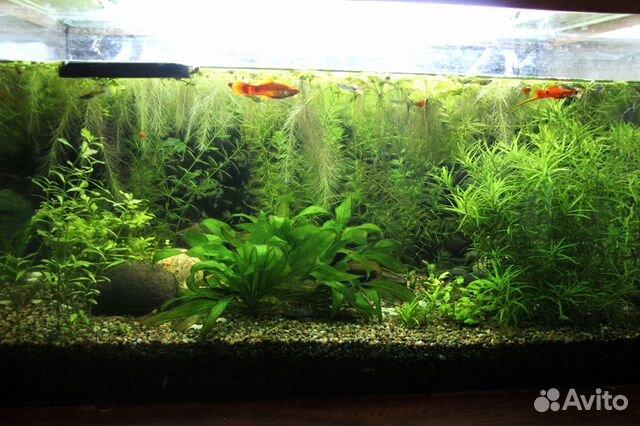 Растения для аквариума 89816807463 купить 1