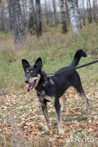 Собака в дар купить на Зозу.ру - фотография № 4