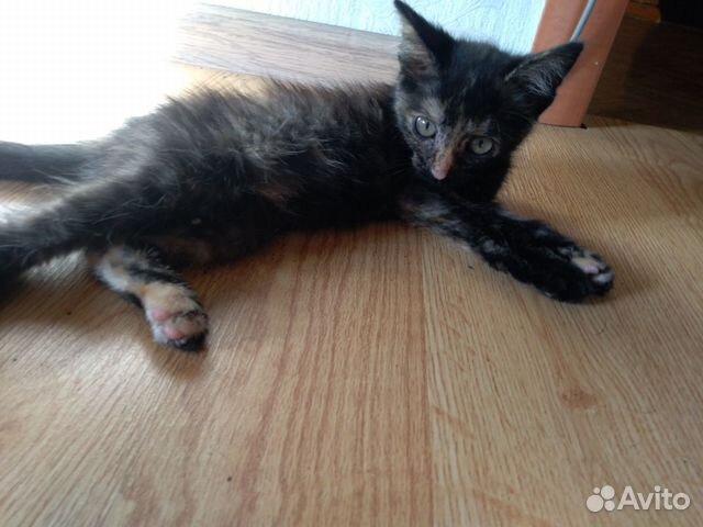 Кошка, 3-4 мес  89511434155 купить 1