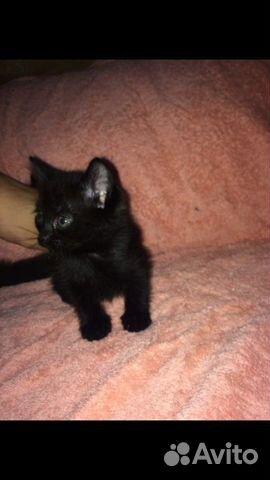 Котята в добрые руки  89000273244 купить 4