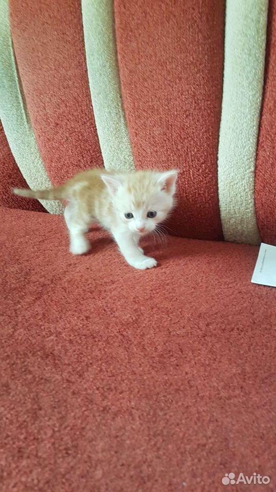 Отдам котят  89196683519 купить 10