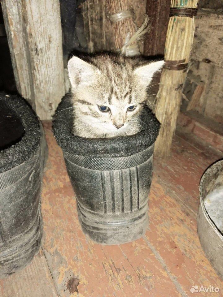 Отдам котенка в хорошие руки(мальчик)  89204806040 купить 1