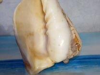 Морской Декор Раковина