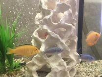 Декарации в аквариум