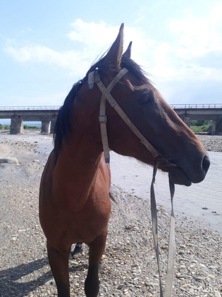 Лошадь  89635969356 купить 2