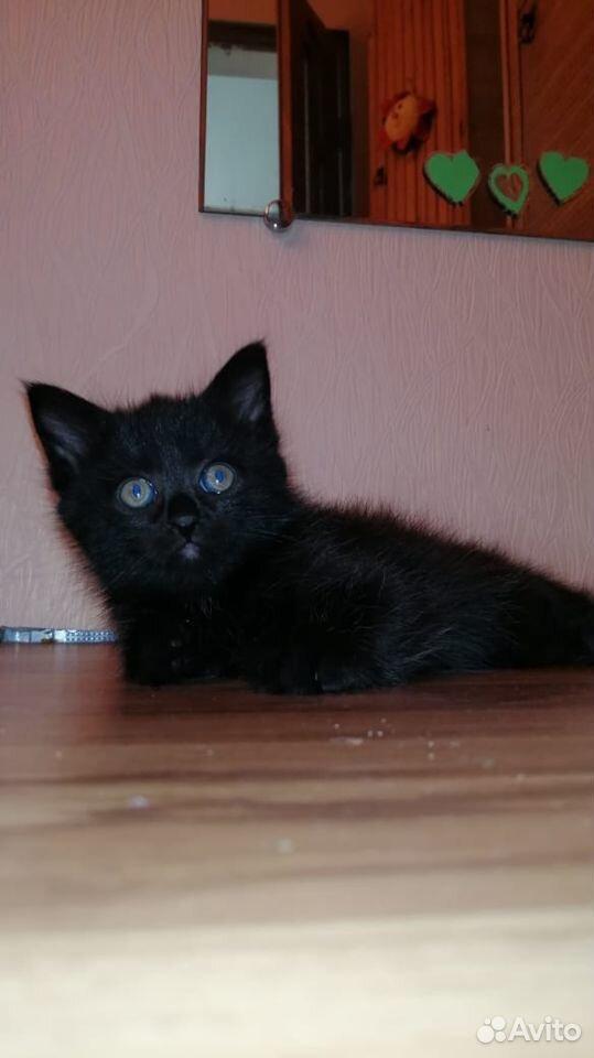Котенок на счастье в доме. Активная девочка