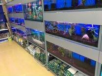 Аквариумы от 4 - 1000 литров, Рыбки и т.д