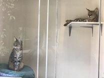 Отель для кошек в стиле лофт