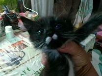 Отдаем в добрые руки котенка — Кошки в Геленджике
