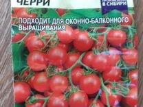 Рассада томатов черри. Колпино