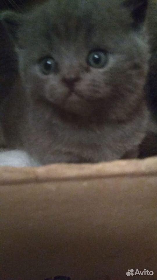 Кошки  89136104151 купить 6