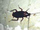 Обработка помещений от насекомых