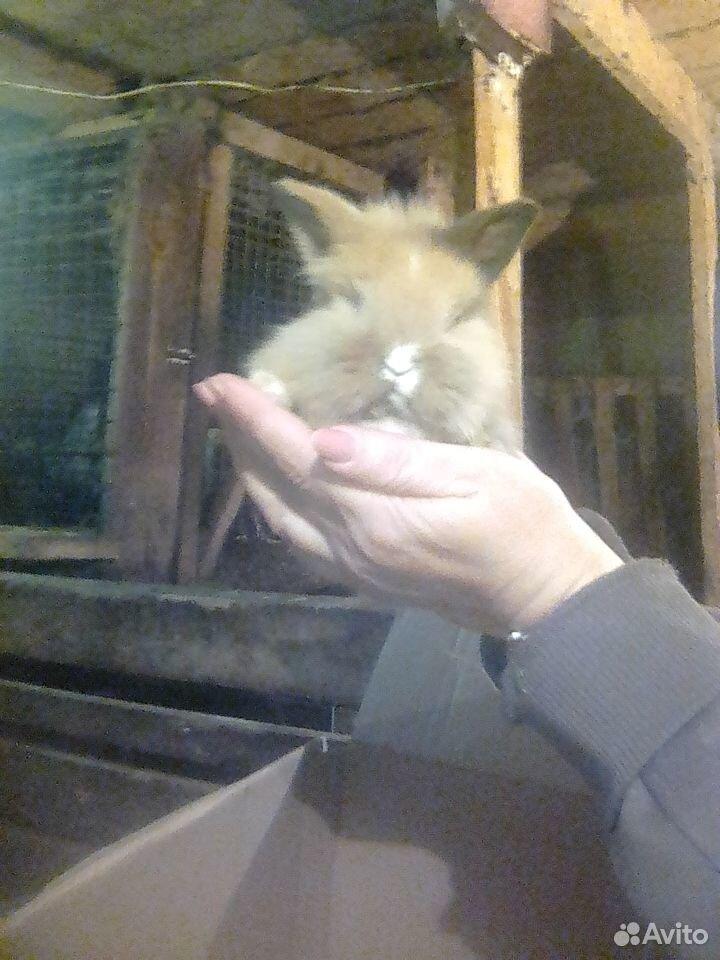 Декоративные крольчата  89038907589 купить 3